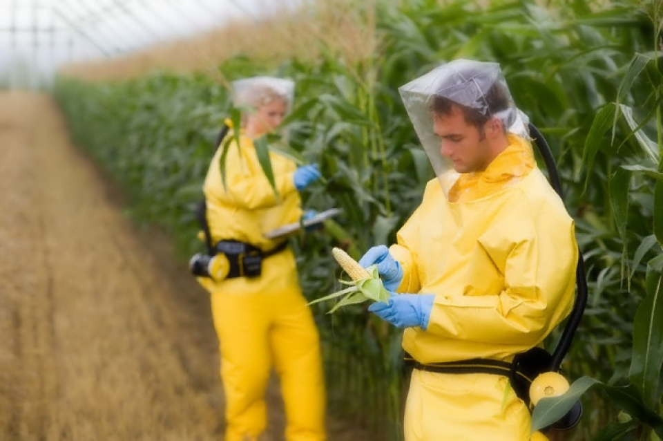 ​Global GMO Free Coalition Set to Help Fund World's Largest GMO Safety Study